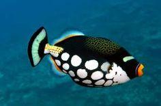 78 Best Saltwater Fish images | Fish, Aquarium fish ...