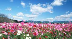 Zbieranie kwiatów też może stać się hobby. Przecież to co się robi warto by było kochać. Ja bardzo lubię kwiaty ze względu na to, że są bardzo piękne i odzwierciedlają moja dusze, którą uważam za piękną.   http://kwiatywoknach.pl