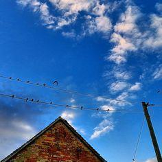 Abhängen am Sonntag....  #birds #vögel #stromleitung #sundayfunday #relaxing #hangingout #justdontdoit #bluesky #blauerhimmel
