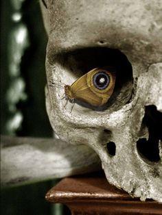 A silk spinner is resting in a human skull. - A silk spinner is resting in a human skull. Skull Tatto, Neck Tatto, Skull Moth, Skull Scarf, Skull Head, Photo Illusion, Illusion Pictures, Tattoo Model Mann, Bracelete Tattoo