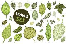 Leaves set - Illustrations