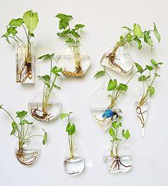 Set von 9Wand aufhängen Glas Terrarium Air Pflanze Vase ... https://www.amazon.de/dp/B01IGCY4NW/ref=cm_sw_r_pi_dp_x_Vxskyb1SCGZEB