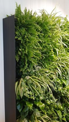 Vertical Garden Plants, Vertical Garden Design, Vertical Plant Wall, Vertical Planting, Interior Garden, Interior Plants, Vertikal Garden, Tropical Garden Design, Tropical Backyard Landscaping