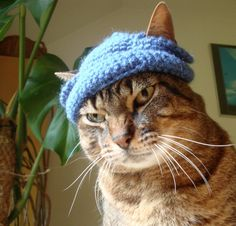 Cat beanie pattern. Yeah... That will go over well.