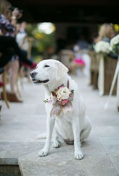 Brides.com: Draw inspiration from your bouquet and the groom's boutonniere when picking flowers for your pet. This white Lab swears a mix of different pale-hued petals attached to a pink bow.