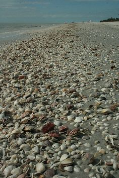 I love collecting seashells. the first time we went to Florida I brought home over 35lbs. I have shells in every room in my home.