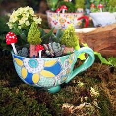 Create mini fairy gardens or a lovely home for all my succulent plants