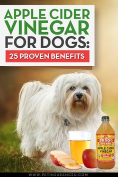 pple Cider Vinegar Dog Treatments Apple cider vinegar, or ACV, is by no means new. In fact, people have been using it for centuries. But ACV is not just benefic. Dog Health Tips, Pet Health, Dog Care Tips, Pet Care, Apple Cider Vinegar Dogs, Diy Pet, Apple Cider Benefits, Dog Grooming, Yorkie