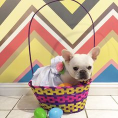 What's in your Easter Basket? by _zoethefrenchie_