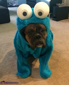 Janna: This is our boxer Roger. He is dressed up as Cookie Monster. The costume is homemade with various items from the fabric store.