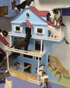 Uma casa para bagunçar! #gatos #cats #catsofinstagram #meows #miaus #canaldogato #cathouse #casadegato