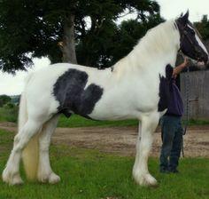 GCDHA Stallions