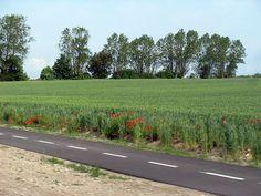 Rural multi-use trail beside poppy field, Sweden