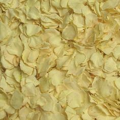 Champagne Petite Preserved Freeze Dried Rose Petals from Flyboy Naturals.  Ivory to off white in color...sweet petite petals from Flyboy Naturals. Shop Now! http://flyboynaturals.com/products/champagne-preserved-freeze-dried-rose-petals-petite.html
