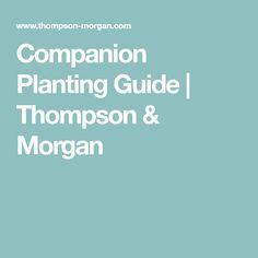 Companion Planting Guide | Thompson & Morgan