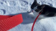 smart sweetie for a walk