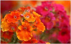 Orange And Pink Flowers Wallpaper   orange and pink flower wallpaper