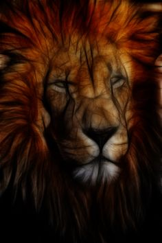 Fractal African Male Lion in Darkness.