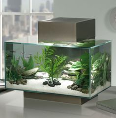 Nano-aquarium, l'anti-kitsch par excellence !