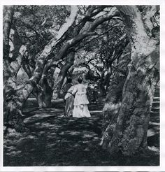 Eadweard Muybridge photograph collection, 1868-1929  (23)  http://purl.stanford.edu/ff991hz8300