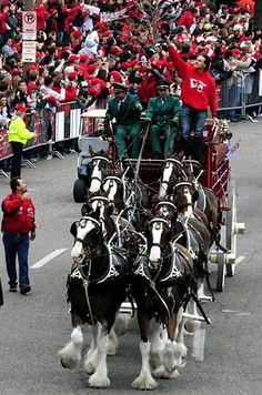 World Series Cardinals Parade