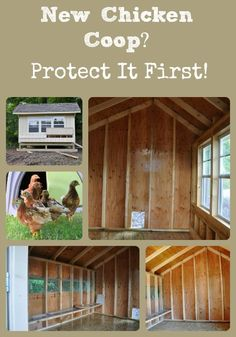 Consider paint protection for the interior on a new chicken coop before adding chickens.