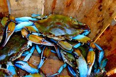 Charleston Blue Crabs by Paul Silva
