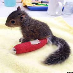 baby squirrel cast