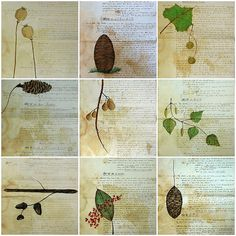 Nature Walk Collection by Bird in the Hand, via Flickr