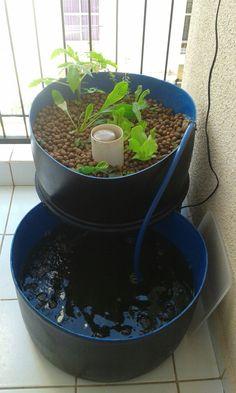 Em pleno funcionamento (Tomate Cereja, Orégano, Almeirão, Alface, Rúcula, Agrião e Morango)