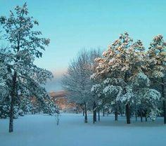 And home for Christmas snow!