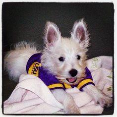 LSU dog!