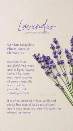Pagan Witchcraft, Wiccan, Magick, Healing Herbs, Holistic Healing, Witch Spell Book, Herbal Magic, Flower Names, Kitchen Witch
