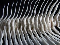 Sea fish white bone close-up Stock Photo - 4717525