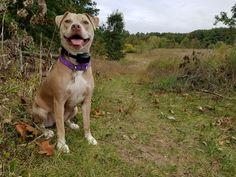 She loves chasing sticks. Amstaff Terrier, Sticks, Love Her, Pitbulls, Dogs, Animals, Animales, Animaux, Pitt Bulls