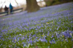 veredit-photographic-poems: Das blaue Band des Frühlings - The blue ribbon of ...