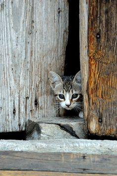 cat by Noemi Seminara