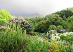 In the Cape Town suburb of Constantia Maureen Viljoen has worked for 30 years to create a garden where indigenous exotic edible and ornamental plants blend seamlessly int. Meadow Garden, Garden Oasis, Dream Garden, Small Garden Landscape, Small Garden Design, South African Flowers, National Botanical Gardens, African Plants, Water Wise