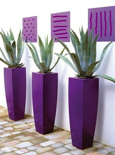 Gorgeous decorating with tall purple pot holders & Aloe Vera