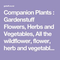 Companion Plants : Gardenstuff Flowers, Herbs and Vegetables, All the wildflower, flower, herb and vegetable seeds you will ever want, the best range for sale online in New Zealand