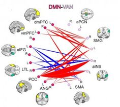 """""""In the last decade, functional medical imaging has revealed that the human brain is functionally organized into large-scale connectivity networks. These networks, and the connections between them, mature throughout early childhood all the way to young adulthood. Networks found to have lagging maturation in ADHD are linked to the very behaviors that are the symptoms of ADHD."""""""