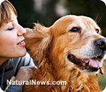 Disease prevention for your cat and dog, without vaccination