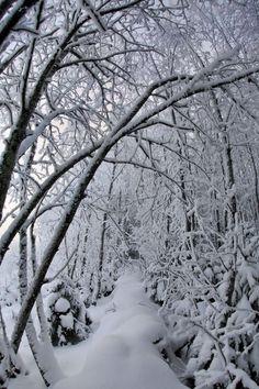 Snow Path, Finland photo via anna