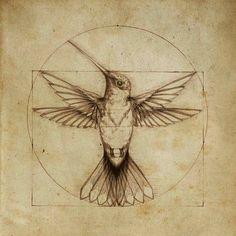 Estudio del Vuelo. Leonardo da Vinci.