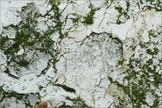 Photo Of Flaky Paint Stone Texture. Stock Photo To Download at ...