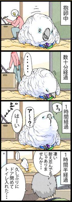 漫画「いたずらオウムの生活雑記」 (422) 抱卵記録更新中 | ライフスタイル | マイナビニュース