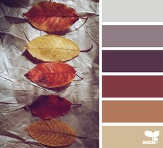 { autumn hues } image via: @_ewabakrac