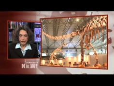 The Sixth Extinction: Elizabeth Kolbert on How Humans Are Causing Larges...
