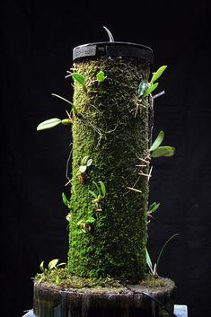 EpiWeb-IIS Grow Tube for growing orchids. Exotic Plants, All Plants, Indoor Plants, Colorful Garden, Tropical Garden, Musgo Sphagnum, Mini Orquideas, Micro Garden, Moss Plant