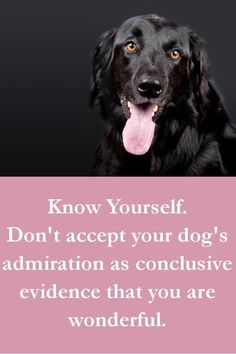 Dog Quotes - Know Yourself. Don't accept your dog's admiration as conclusive evidence that you are wonderful.